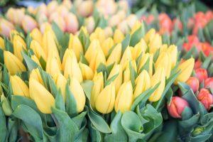 GL-mid-winter-flower-blog-12-1024x684