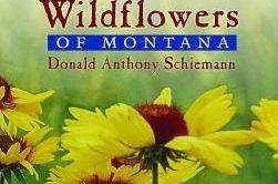 Wildflower Wanderings by Dani Buehler